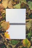 Раскройте пустую книгу на сухих листьях в осени Чтение, ностальгия, Edu Стоковая Фотография