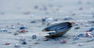Раскройте раковину, белые камешки песка, розовых и голубых Стоковое Изображение RF