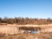 раскройте тростники пруда озера заповедника земли травы летнего дня золотые Стоковое Изображение RF