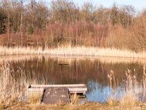 раскройте тростники пруда озера заповедника земли травы летнего дня золотые Стоковые Изображения