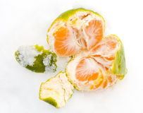 раскройте tangerine снежка стоковые изображения rf