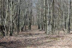 Раскрывать через древесины Стоковая Фотография