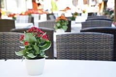 Раскрытое кафе в утре в старом европейском городе стоковое изображение rf