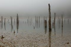Распадаясь пни дерева в озере стоковое фото rf