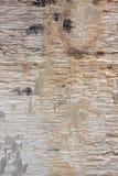 Распаденная древесина. Стоковая Фотография
