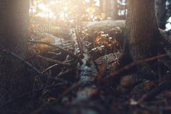 Распадаясь упаденное дерево Стоковая Фотография