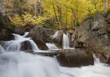 распадок листва падений ellis Стоковая Фотография RF