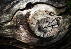 Расплывчатая деталь старой ветви Стоковые Фотографии RF