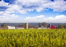 расплывчатое поле фермы зданий Стоковые Фотографии RF