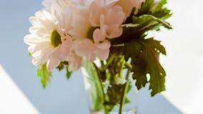 Расплывчатые белые хризантемы букета Движение промежутка времени солнечного света видеоматериал