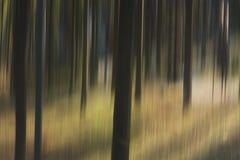 Расплывчатые деревья в древесинах Стоковые Фотографии RF