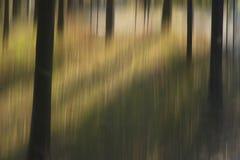 Расплывчатые деревья в древесинах Стоковые Фото