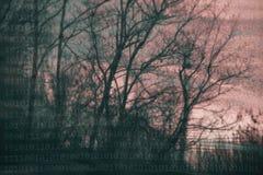 Расплывчатые художнические силуэты дерева с двоичными числами Стоковое Изображение RF