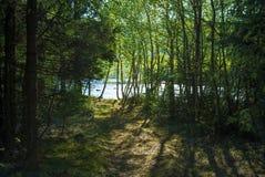 Располагаться лагерем в мирном лесе озером с солнечностью освещает через деревья Стоковое фото RF
