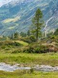 Располагаться лагерем в одичалой долине стоковое фото rf