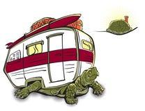 располагаться лагерем идет черепаха Стоковое Фото