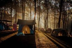 Располагаться лагерем света Солнца стоковые фотографии rf
