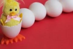 r Располагаются желтый цыпленка игрушки младенец насидел от яйца около строки белых яя цыпленка на красной предпосылке Символ стоковые фото