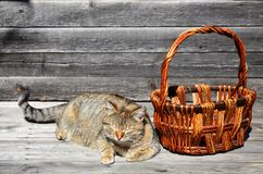 Располагаются толстый кот рядом с лож пустыми плетеной корзины на a Стоковое Изображение RF