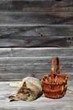 Располагаются толстый кот рядом с лож пустыми плетеной корзины на a Стоковая Фотография RF