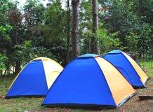 Располагаясь лагерем купол дерева стоковое фото rf