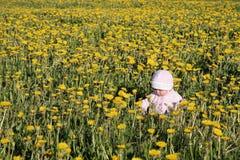 распологать лужка одуванчиков младенца Стоковые Изображения RF