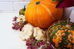 Расположение благодарения с тыквами и розовыми семенами стоковые изображения rf