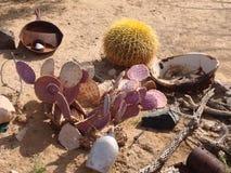 Расположение кактуса пустыни Стоковая Фотография