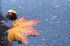 Расположение осени кленового листа и каштана Стоковая Фотография