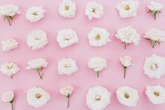 Расположение цветков белых роз на розовой предпосылке Плоское положение, взгляд сверху желтый цвет картины сердца цветков падения Стоковое фото RF