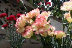 Расположение caryophyllus-цветка гвоздики Стоковое фото RF