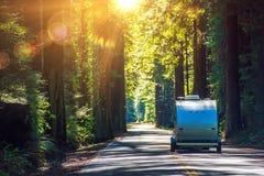 Располагаться лагерем в Redwoods Стоковое Изображение