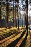 Располагаясь лагерем pangung Стоковая Фотография RF