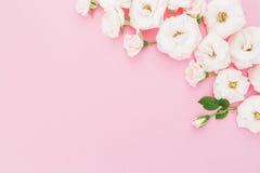 Расположение бутонов белых роз на розовой предпосылке Плоское положение, взгляд сверху playnig света цветка предпосылки Стоковое Изображение RF