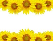 Расположение границы солнцецвета Стоковое фото RF