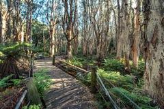 Расположение деревьев в парке centennial Сиднея Стоковые Изображения