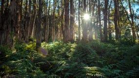 Расположение деревьев в парке centennial Сиднея Стоковая Фотография