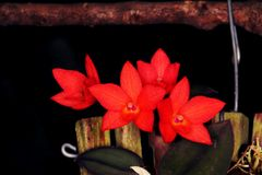 Расположение красных цветков орхидеи стоковая фотография