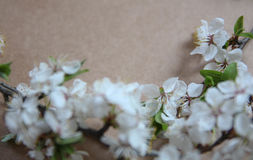 Расположение натюрморта цветков Стоковые Фотографии RF
