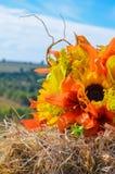 Расположение солнцецвета Стоковое Изображение RF