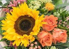 Расположение солнцецвета Стоковое Изображение