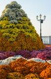 расположение цветка Стоковая Фотография RF
