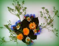 расположение цветка Стоковая Фотография