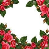 Расположение цветков красной розы Стоковое фото RF