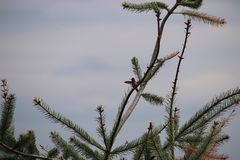 Распространение крылов птицы припевать Стоковые Фотографии RF