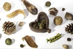 Распространение таблицы рождества Выбор potpourri естественного рождества ботанический Стоковые Фото