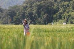 распространять семени Стоковые Фотографии RF