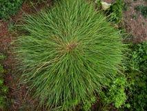 Распространяя tufted трава в земле стоковые фото