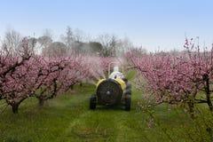 распылять персика Стоковые Изображения