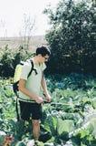 Распылять сад стоковое фото